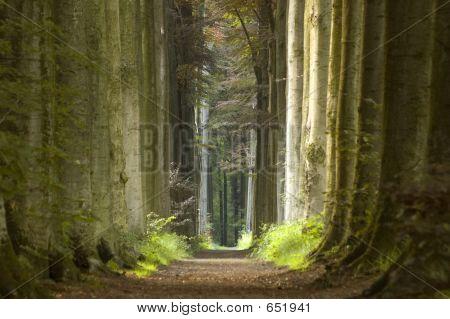 Природы путь