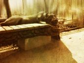 Decorative bench with gypsum panther vintage background. poster