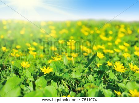 Field Of Early Spring Flowers