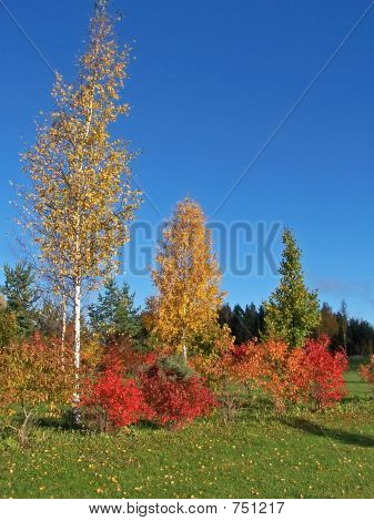 Colourful trees surrounding field