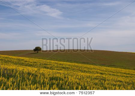 Summer landscape in Alentejo , in Portugal poster