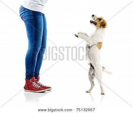 Cute dog playing with his owner