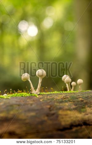 Mushrooms on a trunk
