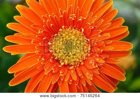Beautiful Bright Orange Flower In Macro