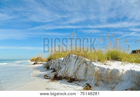 Beautiful Sand Dunes and Sea Oats on the Coastline of Anna Maria Island Florida poster