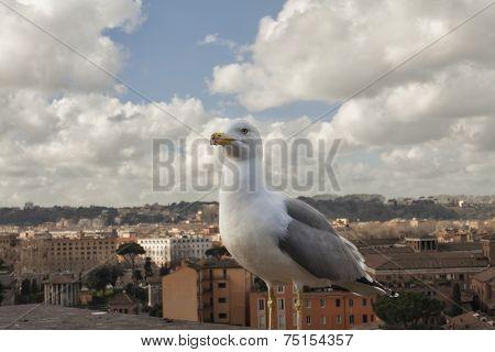 Seagull In Rome