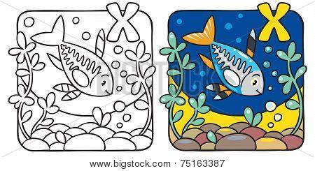 X-ray fish coloring book. Alphabet X