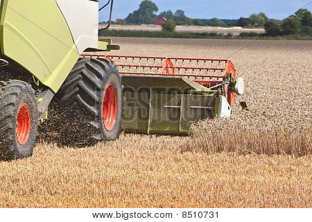 A Combine Harvester Splitting The Wheat