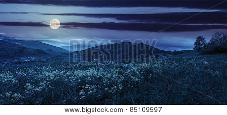 Valley With Yellow Flowers In Mountains At Night