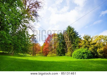 Beautiful spring forest with trees of all colors