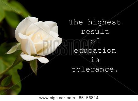 The highest result of education is tolerance - quote by Helen Keller with a pure white rose on dark background
