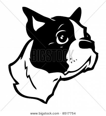 Boston Terrier Vector Illustration