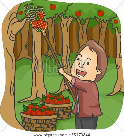 Illustration of a Man Picking Apples in an Orchard