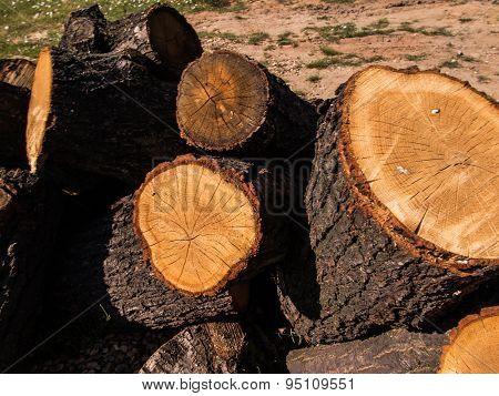 Oak Cut Into Pieces As Fuel