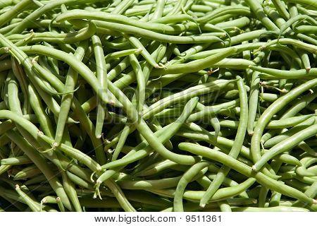 Green Haricots