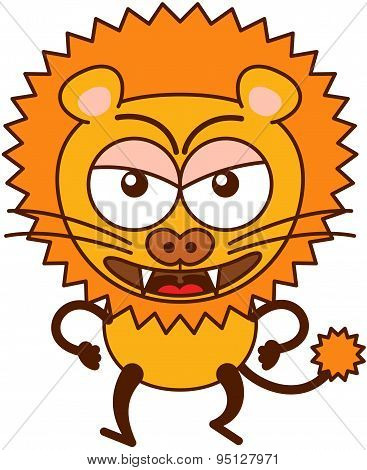 Cute lion walking aggressively and showing how angry it is