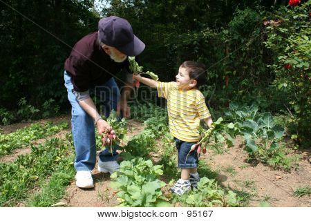 Boy Helping Grandpa In The Garden  07