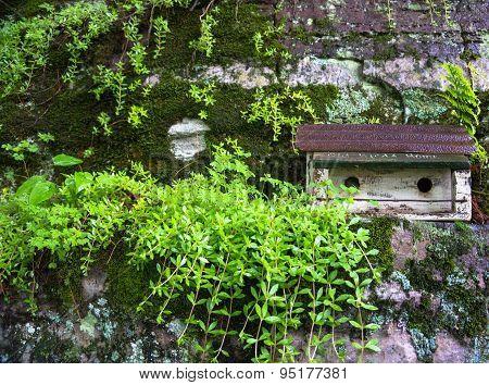 birdhouse in backyard