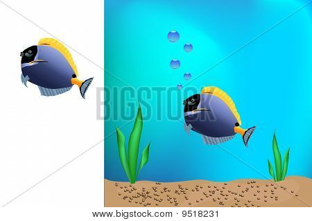 Single blue fish and bubbles in the aquarium poster