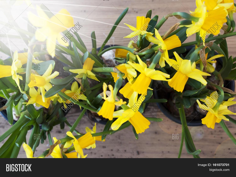 Flayt Lay Sunny Yellow Image Photo Free Trial Bigstock