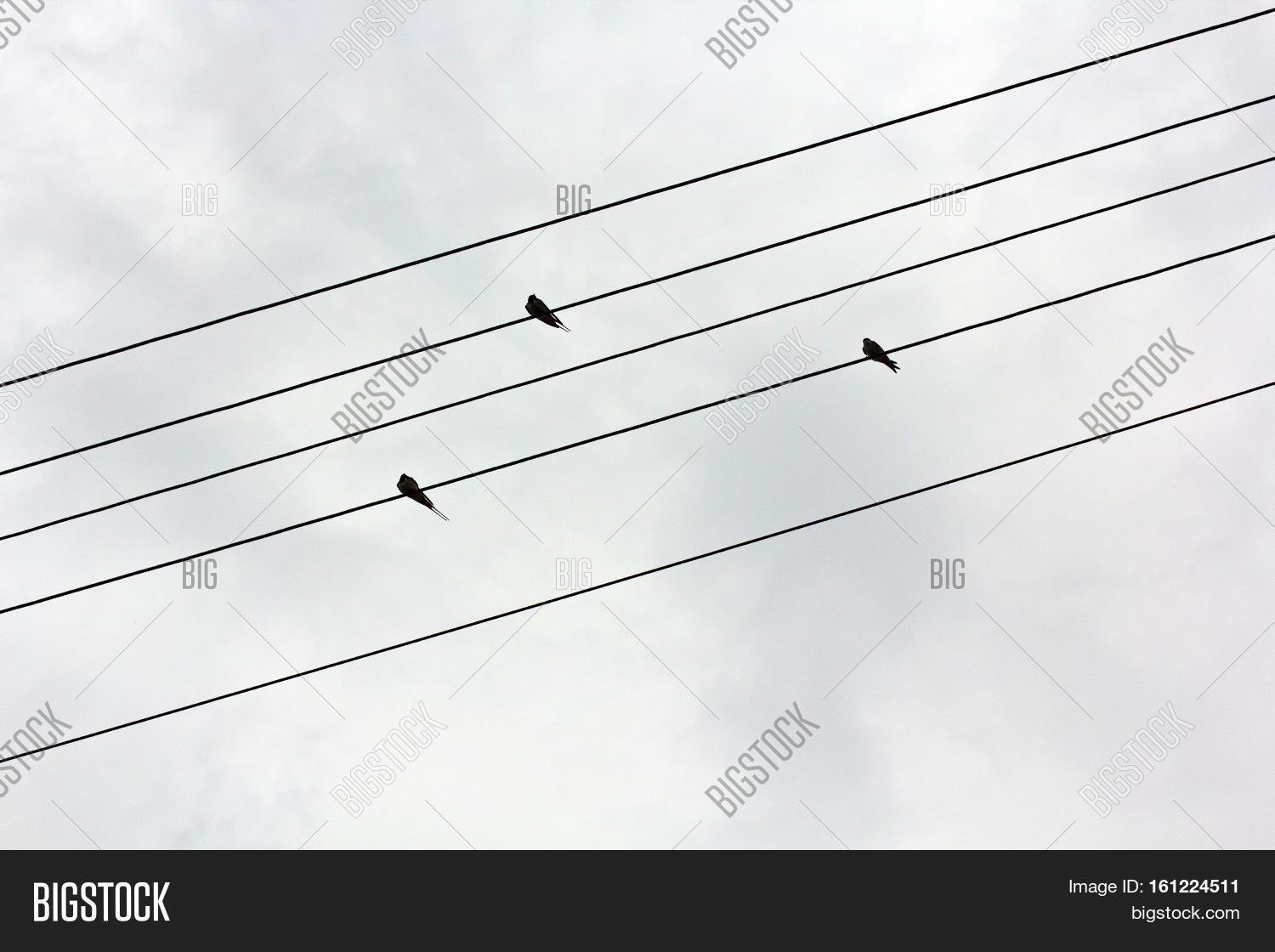 On the electric wires sit three swallows or canary. Birds sit on wires on a