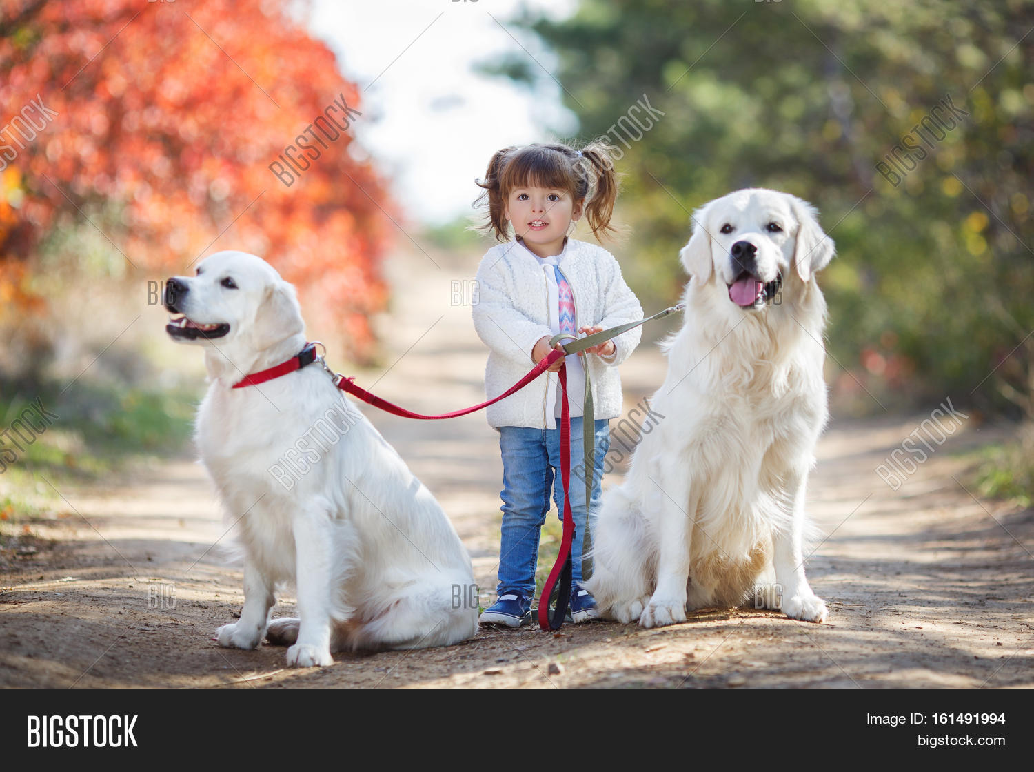 Little Cute Girl Image Photo Free Trial Bigstock