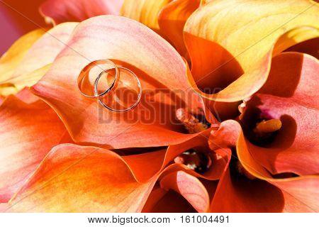 wedding rings lie on the petal orange Calla lilies. Soft focus selective focus