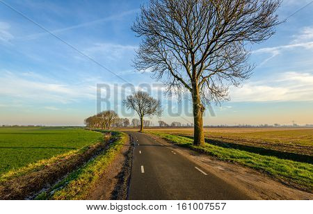 Curving country road in the rural area of a Dutch polder. A row of bare trees is on one side of the road. In the ditch on the left the white frost is still visible.