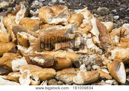 stale bread baguettes thrown on the trash