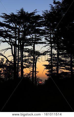 Sun setting among cedar trees in Lebanon.