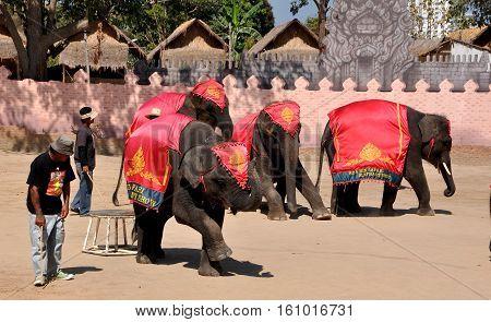 Hua Hin Thailand - January 2 2010: Trainers and their performing elephants at the Hua Hin Safari Elephant Show