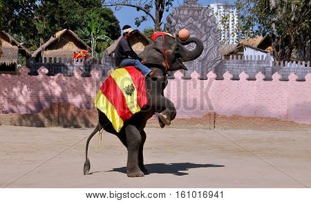 Hua Hin Thailand - January 2 2010: Elephant ridden by a trainer demonstrates its skill playing basketball in performance at the Hua Hin Elephant Show