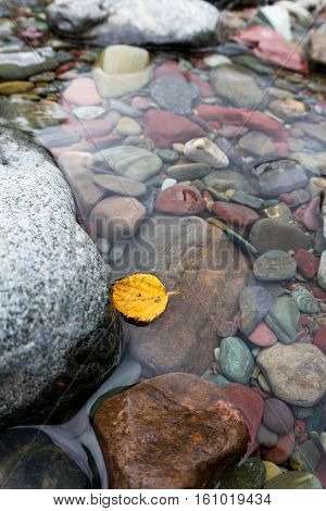 Autumn Leaf In The Water