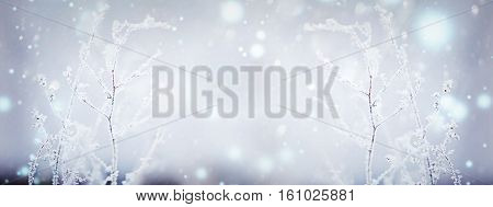 Winter nature background. Winter landscape. Winter scene. Frozen flower. Panoramic Banner