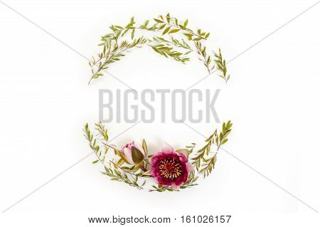 Floral round frame on white background. Flat lay top view. Wreath with gray grefsheim (spiraea cinerea) leaves and nymphaea waterlily purple flower with space for text.