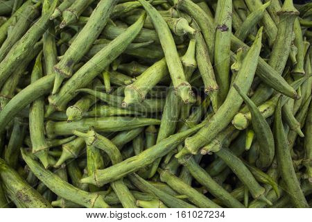 Green pods bunch on market display. Autumn harvest market with vegetables. Green bean long pods for food. Raw legume as cooking ingredient. Natural vegetarian cuisine. Healthy nutrition. Bean salad