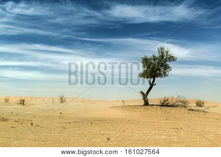outdoor dry sand tree standing dune in oman sky old biggest desert rub al khali