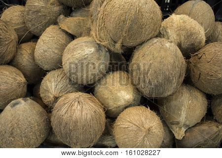Whole coconuts in pile closeup photo. Exotic fruit or nut. Brown hairy coconuts for sale. Selling coconuts in shop. Coco for cocktails or water drink. Healthy food for vegetarian. Tropical fruit image