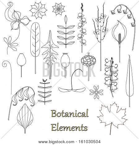 Hand drawn black and white sketch of botanical elements, fruit, flowers, leaf on white, objects isolated, stock vector illustration
