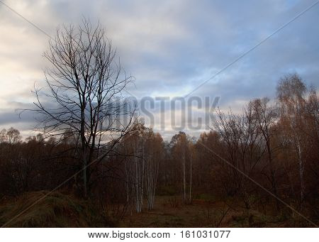 russian forest in the and of autumn.