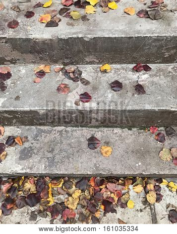Autumn leaves on steps to a browntone in New York City