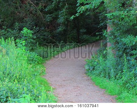 A gravel trail disappearing  into a wooded area.