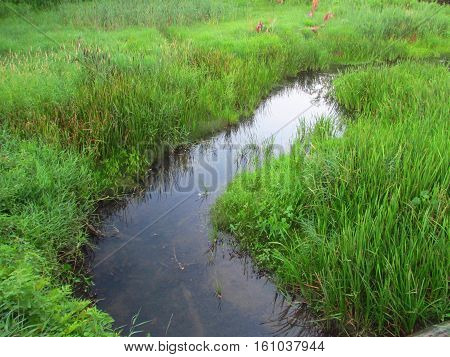 A creek curving through a grassy field.