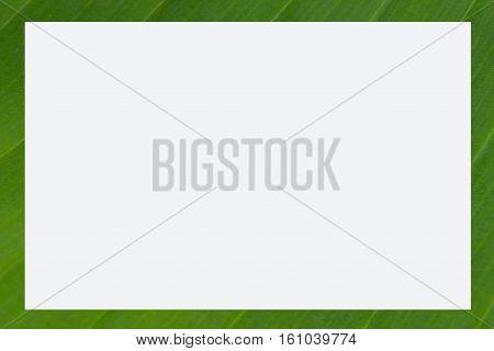 picture frame banana leaf green floral natural