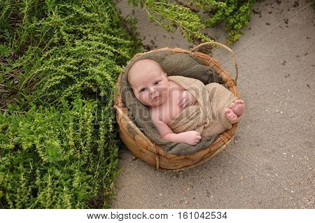 An alert three week old newborn baby boy swaddled in a beige wrap and sleeping in a round organic basket. Shot with a sand and beach vegetation background.
