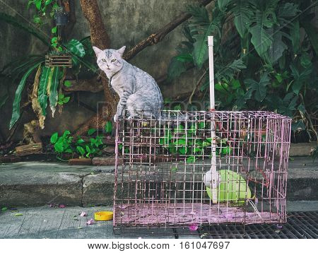 Thailand cat pet in cages , be pitying