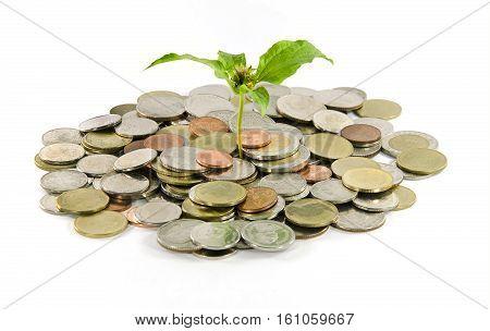 little three plant grow on a thai money coins