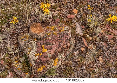 Textures abound among the rocks lichen leaves and woolly sunflowers in this colorful photo