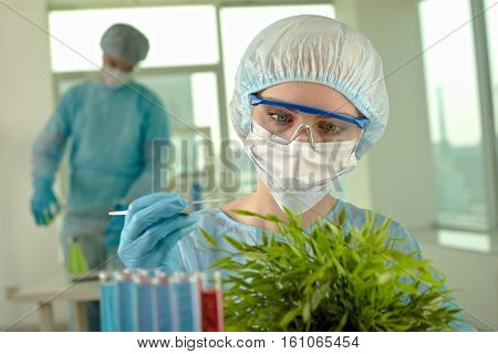 Female biochemist examining plant in the laboratory with her colleague behind
