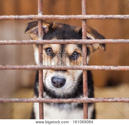 Puppy dog locked in the cage waiting for adoption